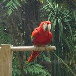 Beautiful parrot at Rainbow Springs