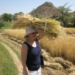 trekker attempting to carry wheat