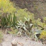 Wiele endemicznych gatunków roślin