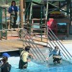 Les enfants dans le bassin des dauphins