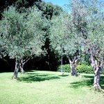 Una zona ombreggiata dagli ulivi