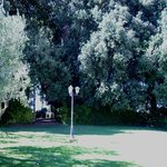 Gli ulivi del piccolo parco/piscina