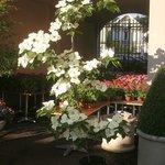 Cottage Flowers 1