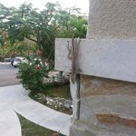 Morning visit from Gecko