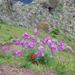 fleurs ç sao lourenco