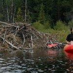 Kayak at Trillium or Timothy Lake