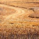 A walk through the prairie grass