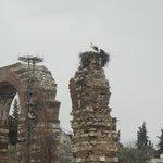 Аисты по дороге к мечети