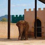 Seltsam schwankender Elefant