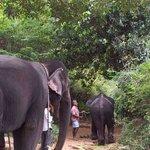 monica the elephant