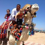 So friendly camel (max)
