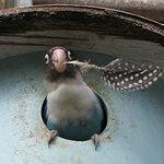 Cheeky Love Bird