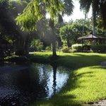 Morning at the Gardens