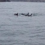 Just some of the pod of Resident Orca Whales.