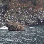 Kittiwakes & Sea Lion Haul Out