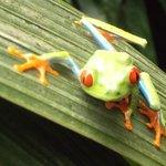 In the frog exhibit