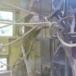 Il bradipo che essere strano