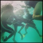 Interacting with the nurse sharks...