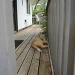 Monkey Boy on our deck