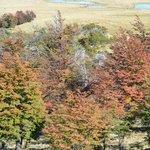 El bosque en otoño se pone precioso.