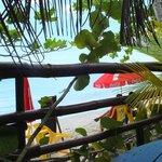 A l'ombre d'une végétation exotique