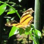 Butterfly Garden Excursion