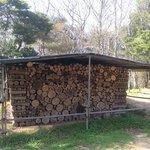 Holz fuer den Winter