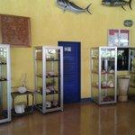 Coleccion de conchas marinas