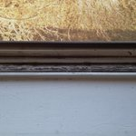 Window sill. Dead bugs and dirt. Yum!