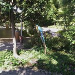 Parrots in the courtyard