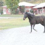 eines der 120 Pferde