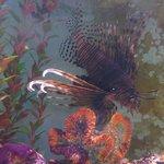 Aquarium At Rockport Harbor - LionFish- Rockport,TX