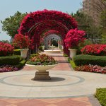 Bougainvillea bowers in well kept gardens and grounds