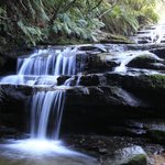 Blue Mountains Guides - Day Tours