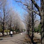 Hikarigaoka Park