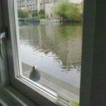 Una papera dalla finestra della camera