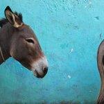 Famous Lamu Donkeys!