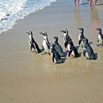 Penguin release