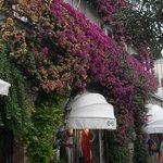 Particolare di un negozio con questa parete ricoperta di fiori