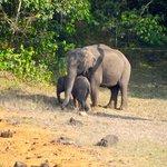 Inside Park - Group of Elephants