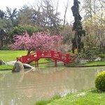 le pont et son cerisier
