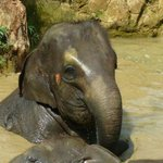 """One of the cute elephants in """"the pool"""""""