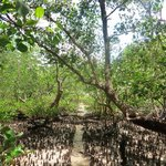 Mangroves in front of the resort