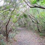 stroll through maritime forest