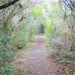 path through maritime forest