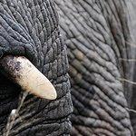 Elephants at Royal Malewane - www.horizonsnouveaux.com