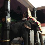 elephant in hindou temple