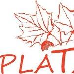 Le Platane