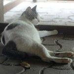 軒下に猫がいます♪
