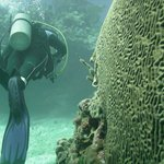 Wall of brain coral